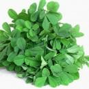Fenugreek as Herbal Remedy for Snoring