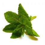Spearmint as a Herbal Remedy for Snoring