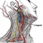Lingual Thyroid As A Cause Of Snoring