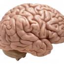 Can Sleep Apnea Cause Brain Damage